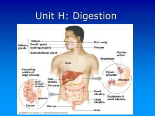 Unit H: Digestion