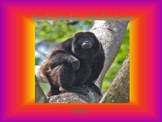 Howler Monkey in the Rainforest