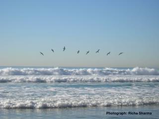 Ocean Production