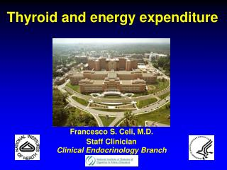 Thyroid and energy expenditure