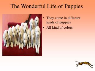 The Wonderful Life of Puppies