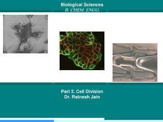Biological Sciences B . CHEM. ENGG. Part 2.  Cell Division Dr . Ratnesh Jain