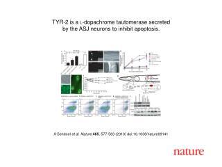 A Sendoel  et al .  Nature 465 ,  577 - 583  (2010) doi:10.1038/nature09141