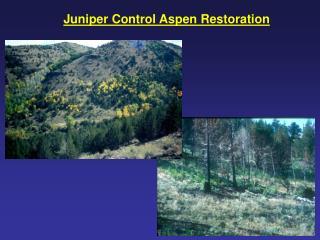 Juniper Control Aspen Restoration