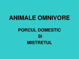 ANIMALE OMNIVORE