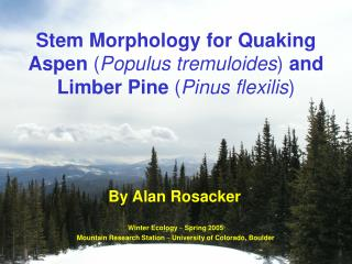 Stem Morphology for Quaking Aspen  ( Populus tremuloides )  and Limber Pine  ( Pinus flexilis )