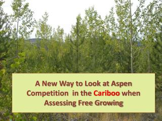 A New Way to Look at Aspen Competition  in the  Cariboo  when Assessing Free Growing