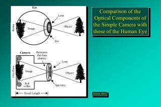 Comparison of the Optical Components of the Simple Camera with those of the Human Eye