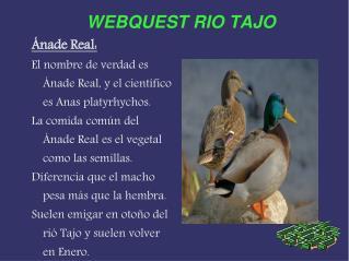 WEBQUEST RIO TAJO