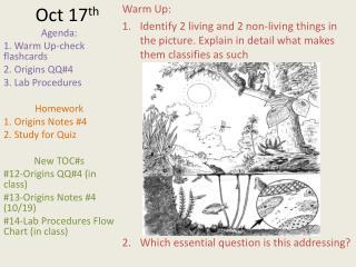 Oct 17 th