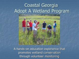 Coastal Georgia  Adopt A Wetland Program