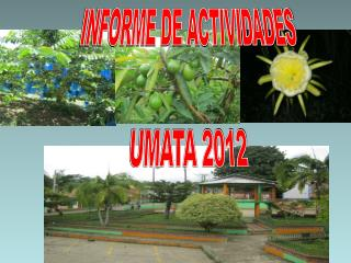INFORME DE ACTIVIDADES UMATA 2012