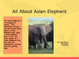 All About Asian Elephant