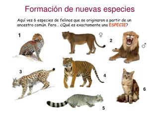 Formación de nuevas especies