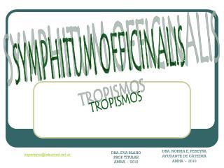 SYMPHITUM OFFICINALIS