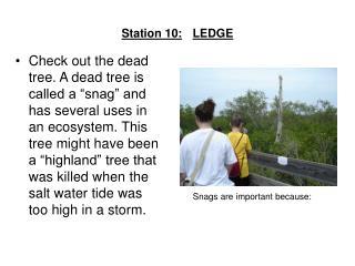 Station 10: LEDGE