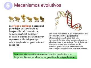 Mecanismos evolutivos
