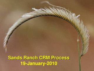 Sands Ranch CRM Process 19-January-2010