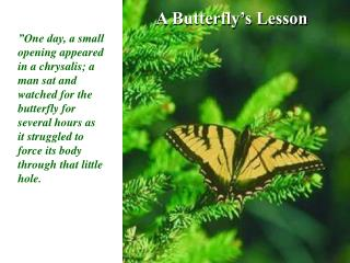 Butterfly PowerPoint