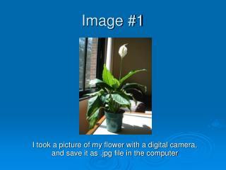 Image #1