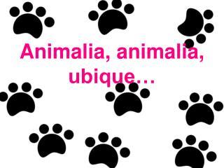 Animalia, animalia, ubique…