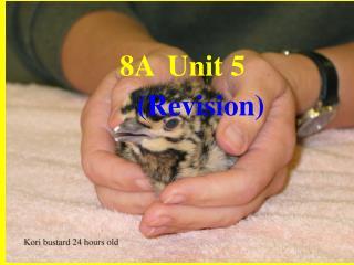 8A Unit 5 (Revision)