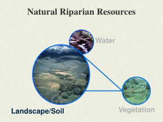 Ppt soil and natural vegetation powerpoint presentation for Soil resources definition