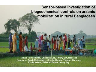 Sensor-based investigation of biogeochemical controls on arsenic mobilization in rural Bangladesh