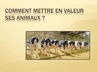 COMMENT METTRE EN VALEUR SES ANIMAUX ?