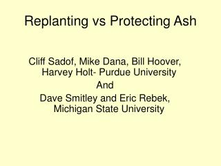 Replanting vs Protecting Ash