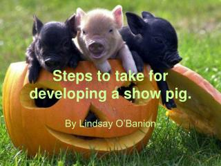 Steps to take for developing a show pig.