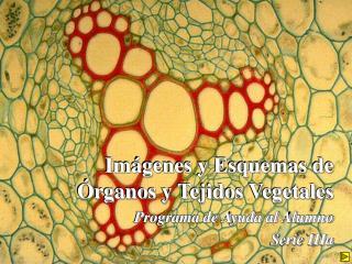 Im genes y Esquemas de  rganos y Tejidos Vegetales