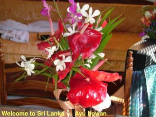 Welcome to Sri Lanka  -   Ayu bowan