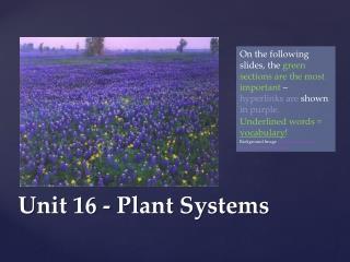 Unit 16 - Plant Systems