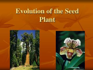 Evolution of the Seed Plant