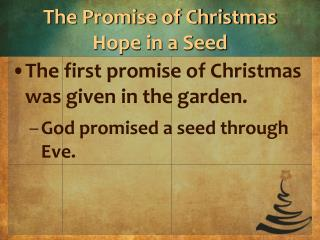 The Promise of Christmas Hope in a Seed