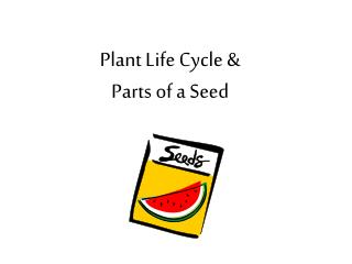 Plant Life Cycle & Parts of a Seed