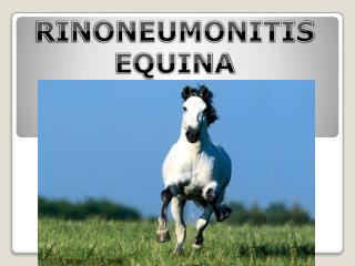 RINONEUMONITIS  EQUINA (RNE)