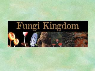Kingdom Fungi-Introduction