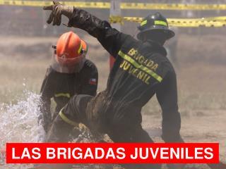 LAS BRIGADAS JUVENILES