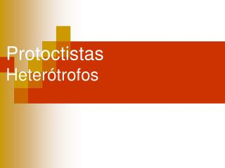 Protoctistas Heterótrofos