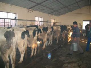 奶牛饲养导论  Introduction to Dairy Feeding