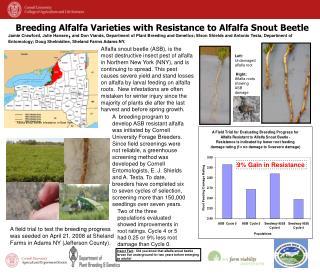 Breeding Alfalfa Varieties with Resistance to Alfalfa Snout Beetle