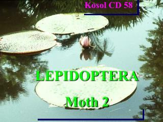 LEPIDOPTERA Moth 2