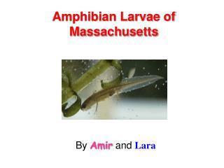 Amphibian Larvae of Massachusetts