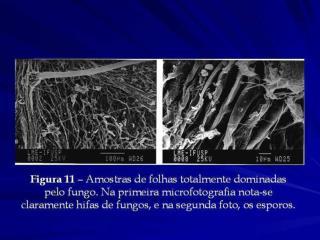 Pedro Henrique Arruda Aragao - Slides 14 a 26