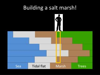 Building a salt marsh!