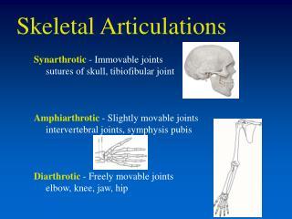 Skeletal Articulations