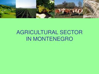 AGRICULTURAL SECTOR IN MONTENEGRO