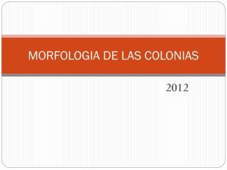 MORFOLOGIA DE LAS COLONIAS